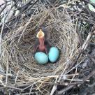 Newly hatched baby bird