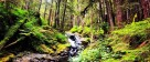 Sol Duc River in Olympic NP